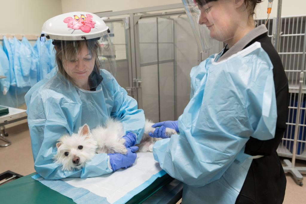 Flint Animal Cancer Center Chemotherapy