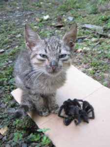 Cat with spider